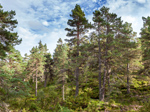 Abernethy Nature Reserve