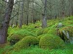 Ariundle Oakwood Nature Reserve