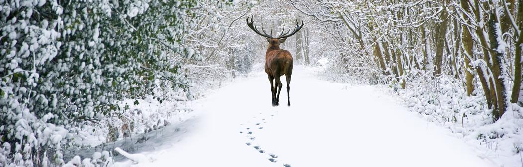 christmas-banner-highlands.jpg