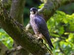 Craigellachie Nature Reserve