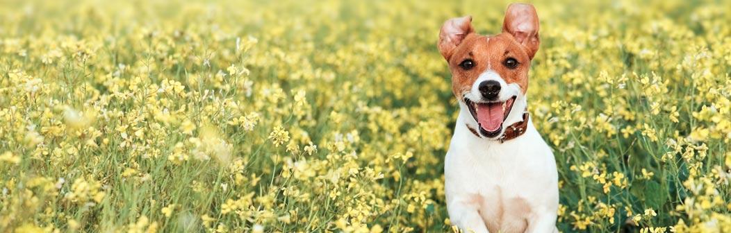 dog-friendly-banner.jpg