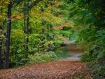 Glasdrum Wood Nature Reserve