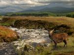 Glen Roy Nature Reserve