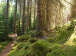 Glenmore Nature Reserve