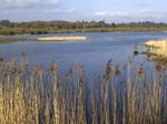 RSPB Loch Kinnordy